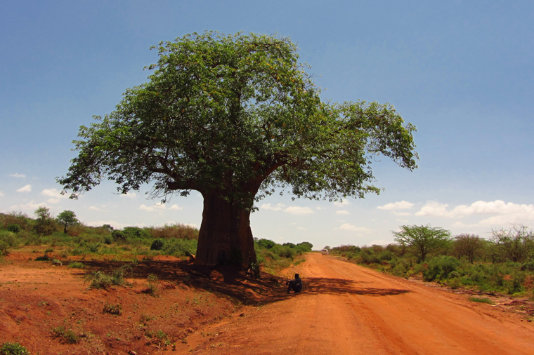Shade under a massive baobab tree