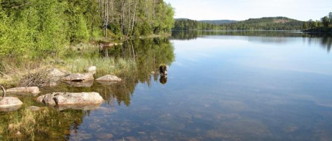 Przemierzając norweskie lasy i jeziora