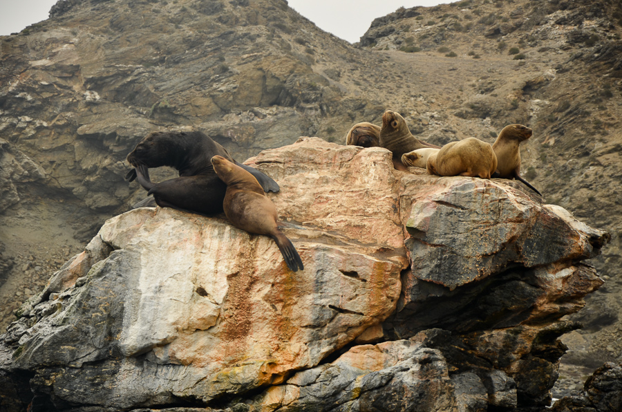 Sea lions resting on rock