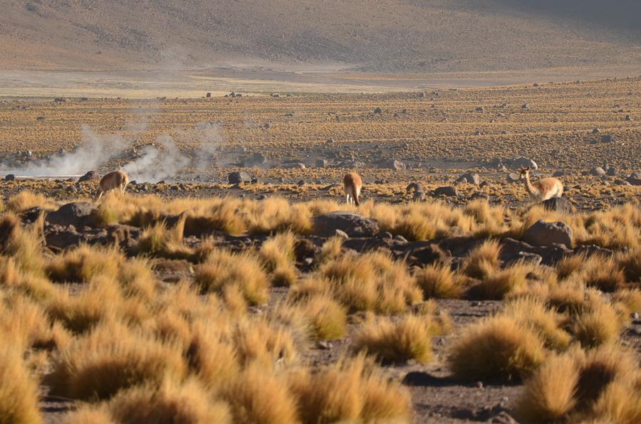 chile-323