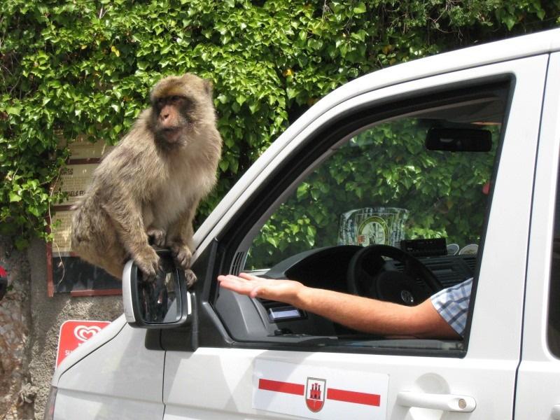 Gibraltar, słoneczna skała pełna makaków