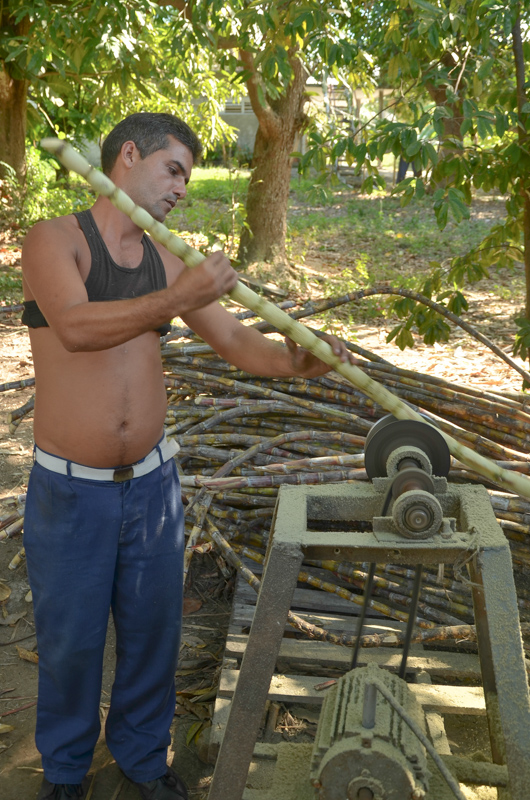 Preparation of guarapo, a sugar cane juice